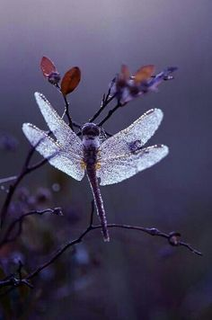 Uploaded by mattamanga. Find images and videos about dragonfly on We Heart It - the app to get lost in what you love. Beautiful Bugs, Beautiful Butterflies, Wild Life, Foto Macro, Mantis Religiosa, Photo Animaliere, Dragonfly Art, Dragonfly Photos, Dragonfly Wallpaper