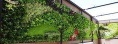 Debido a su belleza, los muros verdes son ideales para: residencias, edificios comerciales y áreas de oficina, instalaciones educativas, hoteles. #VSBlinds