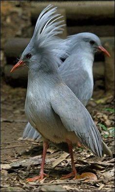 Pretty Birds, Beautiful Birds, Animals Beautiful, Colorful Birds, Exotic Birds, Funny Birds, Young Animal, Mundo Animal, Rare Animals