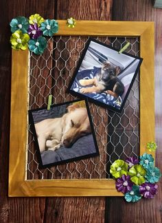 Display your Photos in this Spring-Inspired Frame - The Creative Studio Old Frames, Old Wood, Photo Displays, Creative Studio, Easy Projects, Display Pictures, Angels, Cool Stuff, Spring