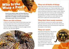 School Journal Level 2 May 2019 / School Journal / Instructional Series / English - ESOL - Literacy Online website - Instructional Series Phil Lester, Science Books, Wasp, Bees, Curriculum, Literacy, Literature, Fiction, Journal