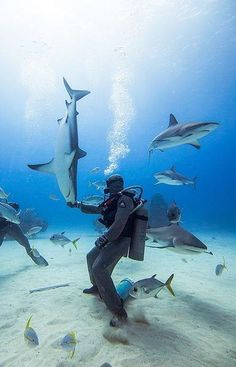 The sharks in the Roatan shark dive are all Caribbean Reef Sharks, all female, displaying a daytime schooling behavior known only to a few species of sharks. Ty