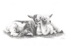 Goats fine art print pencil drawing farmyard art best