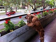 Mirando, por el balcón...