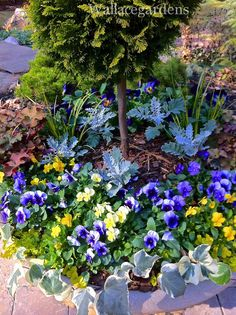 Conifers in Containers! #containergarden #gardening