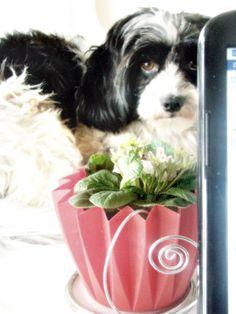 Unternehmen mit Hund - dog-bentley.de