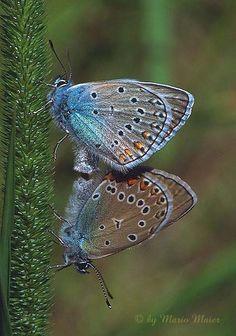 """""""Butterflies are self propelled flowers.""""  ― Robert A. Heinlein"""