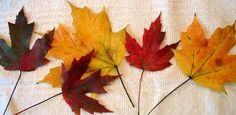 How to Preserve Fall Leaves and Branches with Glycerin | This is an easy process and the leaves will stay supple and keep their color indefinitely. from Today's Homeowner