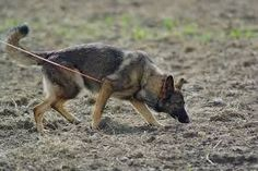 12 Scenting and tracking nose games for dogs - Barkercise