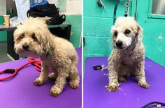 Groomer With Heart Made Of Kibble Gives Shelter Dogs Free Haircuts