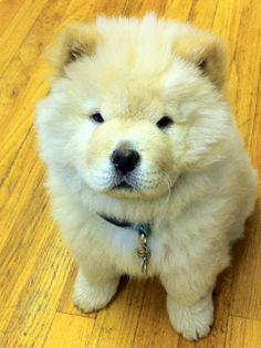 #wanda my sweet puppy