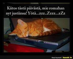 Good Night, Finland, Thankful, Cats, Nighty Night, Gatos, Cat, Kitty, Good Night Wishes