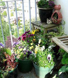 Balcony Garden by lunawicc, via Flickr