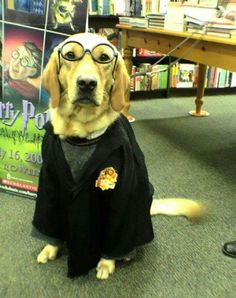 you're a wizard doggy....