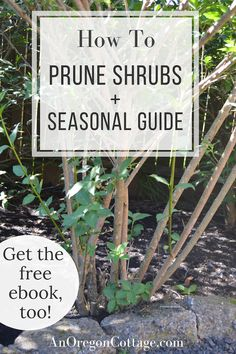 How and when to prune shrubs easily for healthier plants and more blooms using these general tips. Includes a seasonal guide to all kinds of shrubs from hydrangeas to roses to boxwoods. Download the free ebook to always have a pruning guide at your fingers!