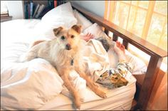 My Dog Wakes Up Too Early! - Whole Dog Journal Article