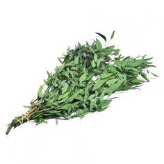 Eucalyptus nicoly stabilisé vendu par 15 bouquets sur infinienature.com