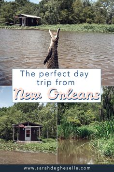 If you are traveling to New Orleans in the United States in the near future, be sure to plan a day trip from New Orleans to explore the surrounding Louisiana countryside. Take an unforgettable Swamp tour and visit one of the beautiful historic plantations. | New Orleans | Day trip from New Orleans | New Orleans plantation | New Orleans swamp tour | New Orleans Bayou | New Orleans country side | Oak alley plantation | Cajun encounters | #daytrip #neworleans