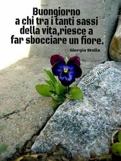 Good Morning, Plants, Genere, Luigi, Zen, Reflection, Smile, Thoughts, Culture