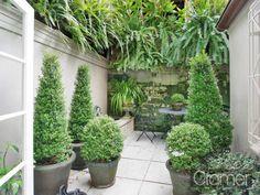 Garden Design Ideas & Inspiration : Small and stylish courtyard in Sydney Garden Shrubs, Garden Pots, Glass Garden, Garden Fences, Topiary Garden, Small Gardens, Outdoor Gardens, Small Courtyard Gardens, Amazing Gardens