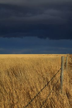 loveandaquestion: (via / Prairie Storm by Alyce Taylor) Beautiful World, Beautiful Places, Landscape Photography, Nature Photography, Fields Of Gold, Nature Aesthetic, All Nature, Pics Art, Farm Life