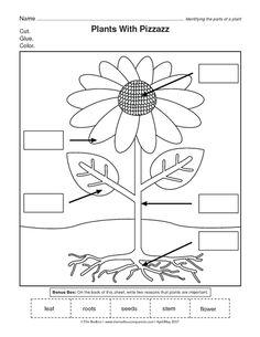 Parts Of A Plant Worksheets Fresh Parts Of A Flower Worksheet Science 1st Grade Science, Kindergarten Science, Kindergarten Worksheets, Science Classroom, Teaching Science, Reading Worksheets, Science Worksheets, Science Lessons, Science Activities