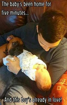 Discover The Fun-Loving Boxer Puppies Personality Boxer Dogs Facts, Dog Facts, Boxer Puppies, Boxer Dog Quotes, Chihuahua Dogs, Boxer And Baby, Boxer Love, I Love Dogs, Puppy Love