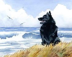 "Schipperke Art Print ""Schipperke at the Beach"" Signed by Artist DJ Rogers"