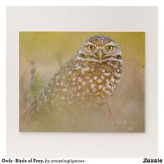 Owls -Birds of Prey. Jigsaw Puzzle