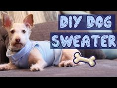 Easy DIY Dog Sweater (No Sew) | Pet DIYs - YouTube