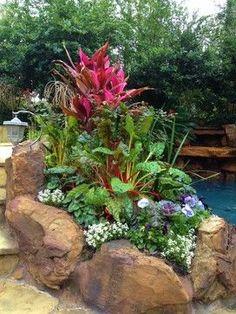 Kingwood landscapes - tropical - landscape - houston - Designs By Elizabeth