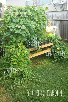 DIY garden. this girl is an amazing gardener. how to grow your own garden on link