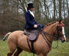 A member of the Duke of Beaufort Boxing Day Hunt, based in Gloucestershire, looks elegant ...