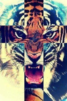 Ohdamn #tiger #cross #animal