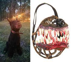 He Looks Angry: Terrifying Zombie/Werewolf Dog Muzzle