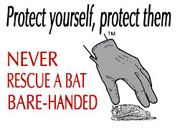 What to do if you've found a bat.