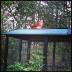 En høne på taget er bedre end to høns på skulderen...eller noget ;-)