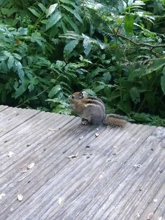 The cute little squirrel in the mountains looked at me and did not fear that I was so distressed http://hbudssport.com