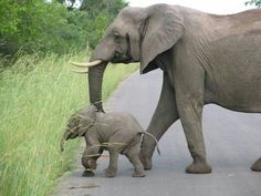 Gonna get lost in the grass - Kruger National Park