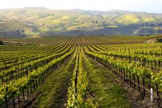 10 Best California Wineries with a View Slideshow at Frommer's