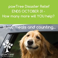 Help another pet in need while helping your pet THEIVE not just survive. Set up you MY pawBox TODAY!!! https://multibra.in/xww77