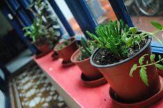 plantitas Planter Pots, Photography, Plants, Photograph, Fotografie, Photoshoot, Fotografia
