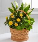 FTD® proudly presents the Better Homes and Gardens® Cheerful Wishes Blooming Basket. Spread sunshine and beauty with a basket of vibrant lush plants blooming to perfection. Gorgeously arriving in a natural woven basket are a collection of nature's finest plants, including a yellow mini rose plant, a white mini calla lily plant, and a gorgeous ivy plant, brought together to provide a source of grace and cheer for your special recipient.