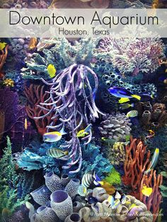 Downtown Aquarium - Houston, Texas | The Momiverse | Article by Patti Morrow | Named one of five family-friendly attractions in Houston, TX #Houston, #travel