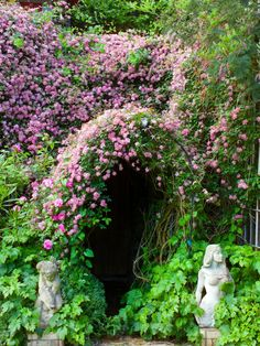 Clematis climb using tendrils that twine around posts, or other plants. Here the flowers have climbed above the arch to create a wonderful blanket of color.