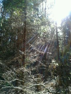 Sunshine is everywhere. Even in the forest.