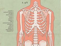 98 самых интересных фактов о человеческом теле