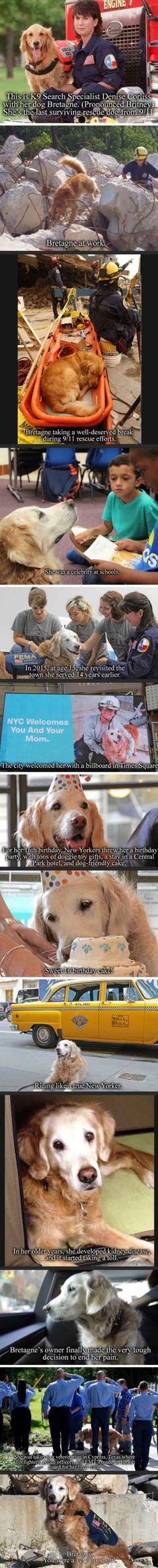 All Dogs Go to Heaven ibeebz.com/