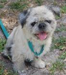 HUMANE SOCIETY OF MANATEE COUNTY BRADENTON, FLORIDA...  http://www.humanemanatee.org/#!dogs/c1x9y