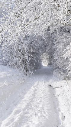 ideas for nature winter wonderland snow scenes Winter Szenen, Winter Love, Winter Magic, Winter Christmas, Winter White, Noel Christmas, Winter Photography, Nature Photography, Iphone Photography